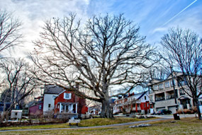 Old_Oak_Brighton_285