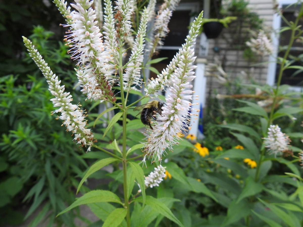Planting native species: a backyard miracle