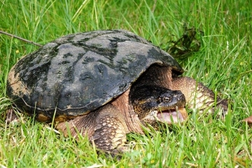 Have you seen turtles nesting in Brewer Park?
