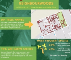 Starting a Neighbour-woods Group