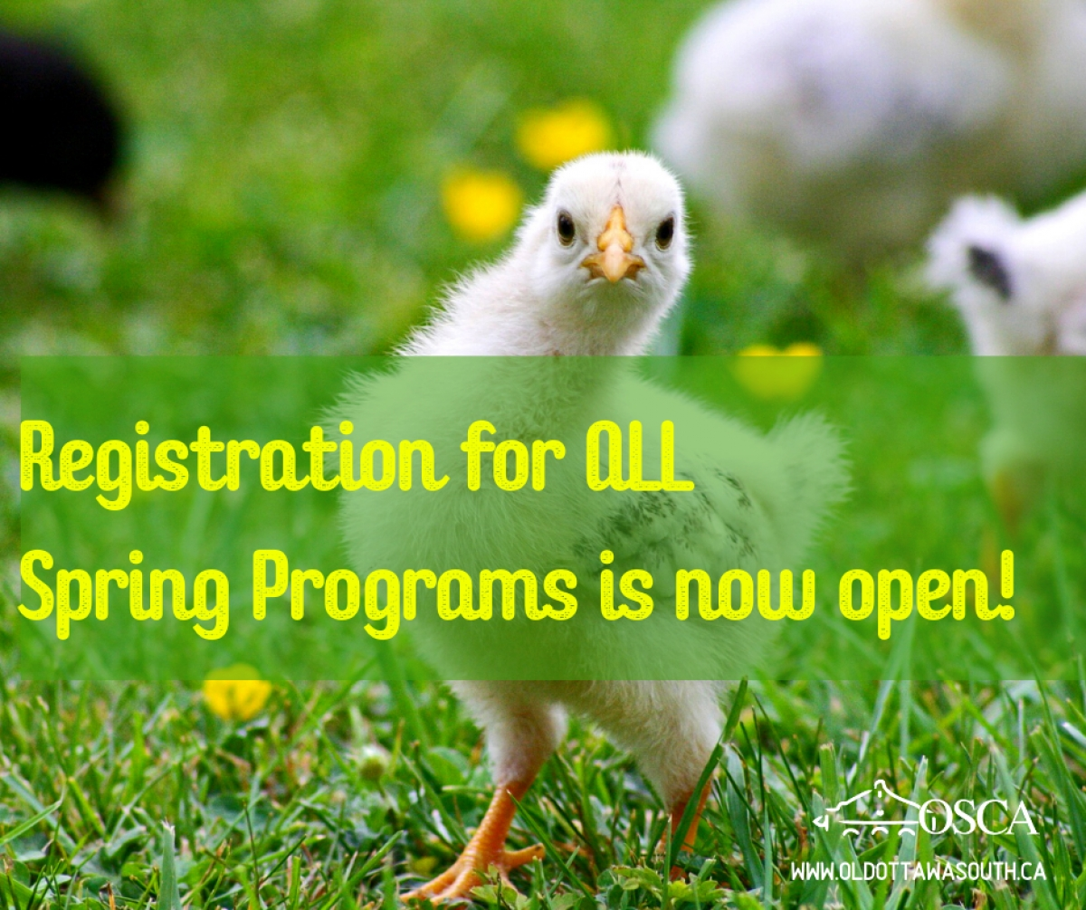 All Spring Program Registration is now Open!